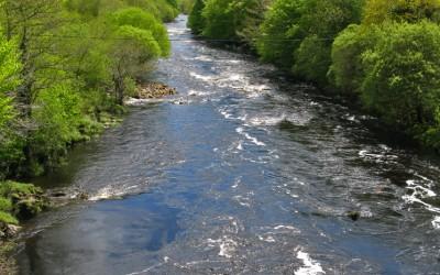 Salmones y reos en el río Finn, Irlanda