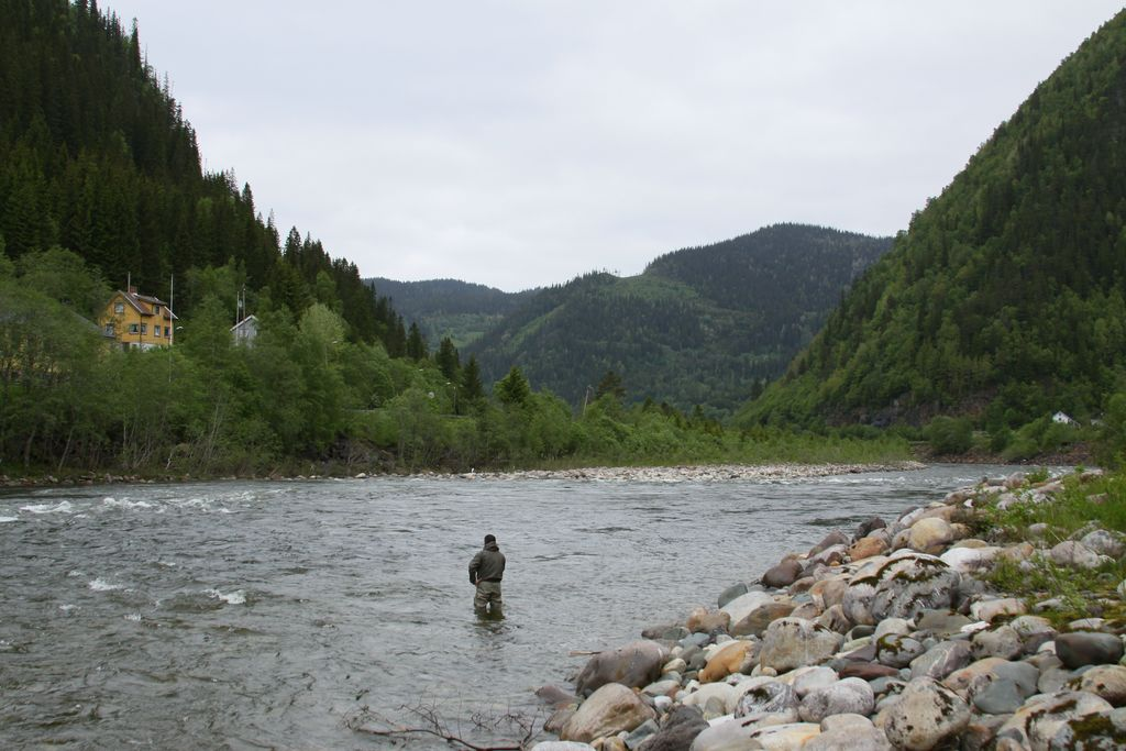 Norway Gaula Salmon Fishing