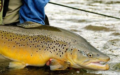 New Zealand South Island Fly Fishing (ENG)
