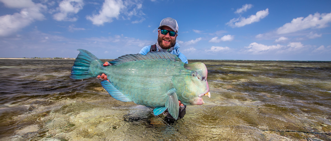 Bump Head Parrot Fish on the Fly in the Seychelles